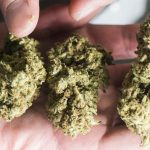 全球首例 加州大麻擬冠產地名