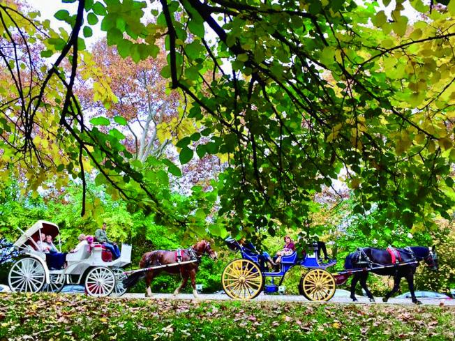 紐約中央公園。(盧秋瑩.攝影)