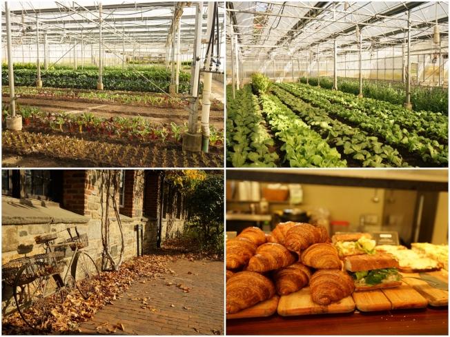 Blue Hill餐廳在Stone Barns Center 內有自己的有機蔬果種植溫室,另有一間小咖啡館提供遊客烘焙物與輕食。