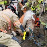 小馬困下水道 出動重機具救出