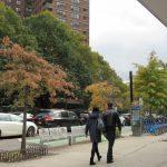 夏季極端天氣 致紐約楓葉難紅