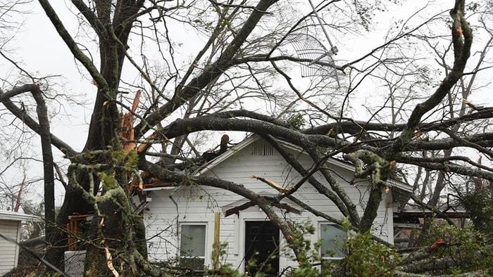 颶風麥可強風吹倒樹,屋主遭壓死。(Getty Images)