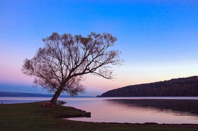 五指湖畔,一棵腰身傴僂的老樹,安詳地迎接第一縷曙色。