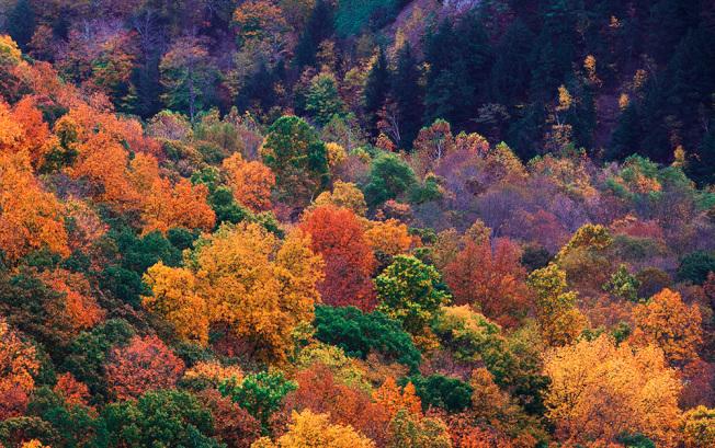 上帝傾覆了一盤油彩,染透了滿山滿谷。