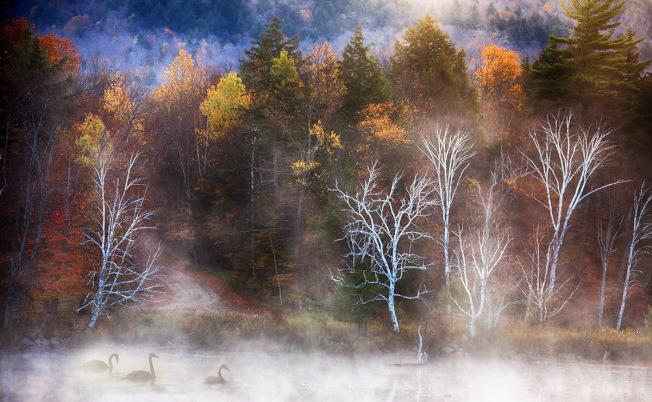 清晨,山林醒來了,天鵝也醒來了,薄霧輕快地揮舞著紗裙。