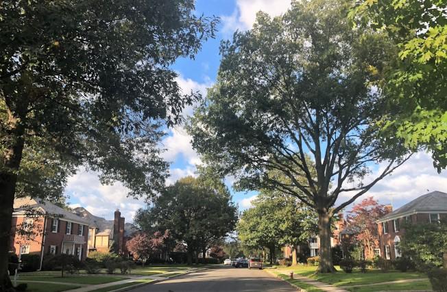 居住社區綠樹成蔭。(記者朱蕾/攝影)