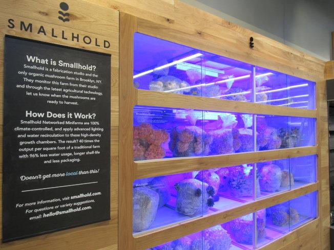 迷你蘑菇農場被放置於餐廳內,一方面供消費者視覺享受,另方面讓廚師現摘現煮。取自Smallhold官網