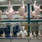 新聞眼 | 培養肉 真能救地球?