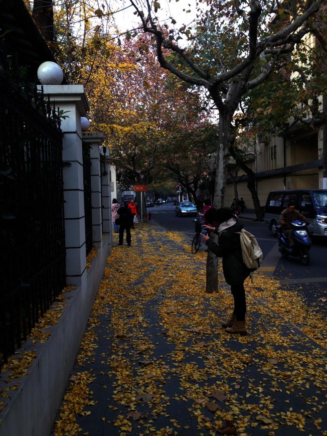 上海过去几年尝试在几条路段推行「落叶不扫」营造秋意景观,获得不少民众好评,如今已有愈来愈多城市跟进。(本报资料照片)