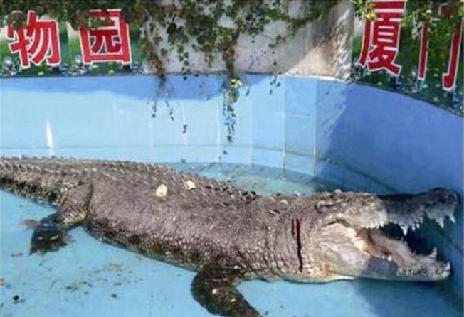 中國遊客拿石頭往「小河」身上砸,導致「小河」頭部嚴重流血,現仍在治療中。(取材自台海網)