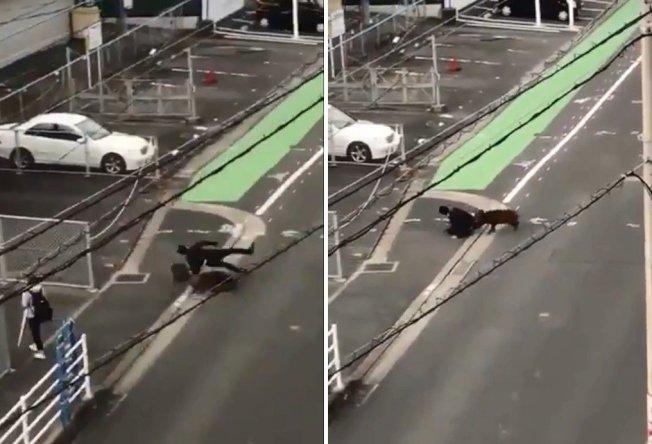 日本一名男性職員在上班路途中,不幸遭到野豬衝撞。圖片來源/Twitter