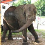 馬戲團別來! 新州創全美首例 擬禁動物入境表演