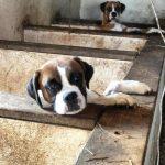冰箱存44隻狗屍 新州婦人被控虐待
