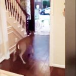 小鹿闖入室 嚇壞小姊妹