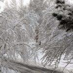 〈圖輯〉暴風雪襲芝 陸空交通打結 積雪逾13吋