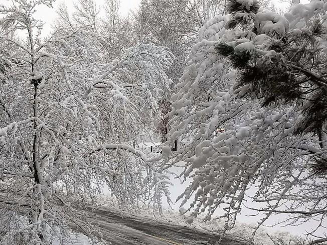 芝加哥西北郊的香柏市(Schaumburg)大雪情形。(讀者Joseph Qian提供)