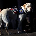 守靈照片感動數百萬人 愛犬「薩利」護靈到華府