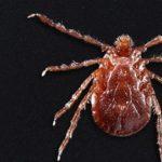 新種蜱蟲在美散布 恐傳播致命疾病