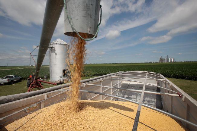 美國農業部長普度認為,中國將再買美國大豆。圖為美國豆農將大豆裝上車。(Getty Images)