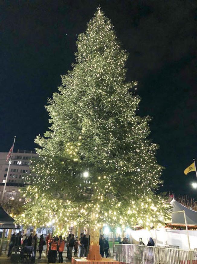 高約50呎的耶誕樹被點亮。(記者李佳琳/攝影)