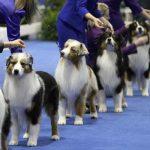 全美最大名犬賽 12.15奧蘭多開賽
