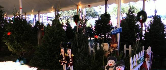 奧蘭多醫生在這家耶誕樹店買了100顆樹,免費送給需要的家庭。(截自視頻)