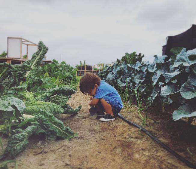 凱利的孩子在農場裡。(Sean Kelly提供)