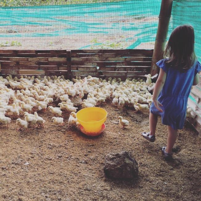 凱利的孩子在養雞場。(Sean Kelly提供)