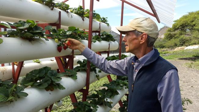 葛雷在他的農場裡檢查蔬果狀況。(葛雷提供)