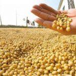 川習會後 中國首度大規模採購美國黃豆