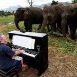 療癒古典鋼琴 盲眼大象聽傻 還有的加入伴奏