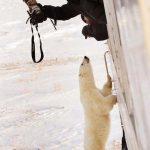 陳寶挺「南北極攝影展」 華埠舉行