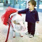 金山交響樂團農曆年音樂會小豬來報喜