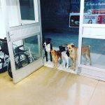 「我們就在這等你!」流浪漢病倒就醫 狗夥伴堅定眼神守門口