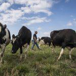 CPTPP生效 美國牛肉與小麥出口前景黯淡