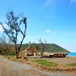 這條祕境公路 代表台灣角逐國際景觀大賞