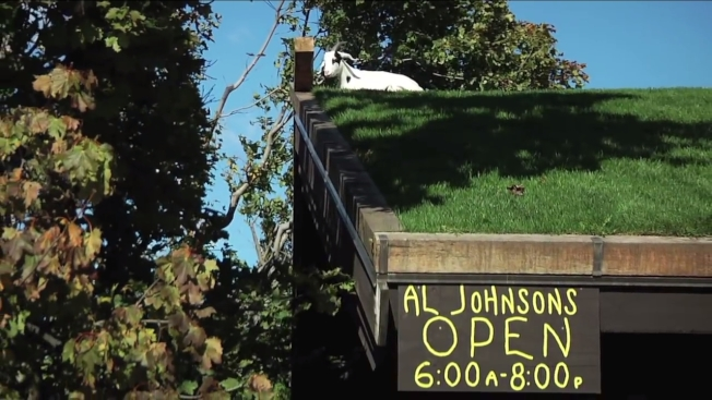 美國威斯康辛州有一間獨特的北歐風格餐廳,在屋頂鋪草皮放羊,成了知名網紅以及慕名而來民眾打卡拍照的熱門景點。取材自YouTube