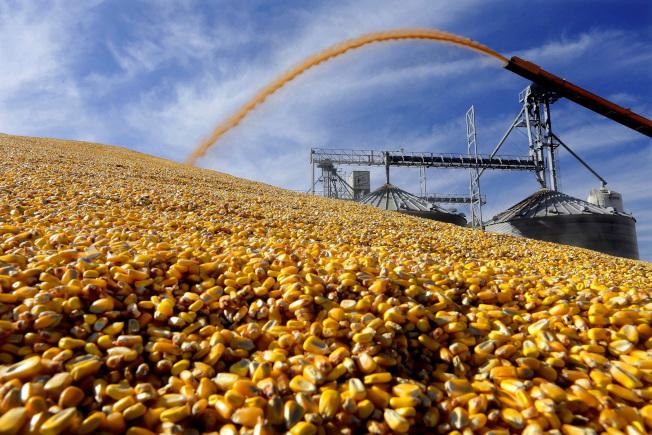 中國在貿易談判期間,重購美國農產品,釋出善意,但美方認為還不夠。圖為美國伊利諾州收成的玉米。(美聯社)