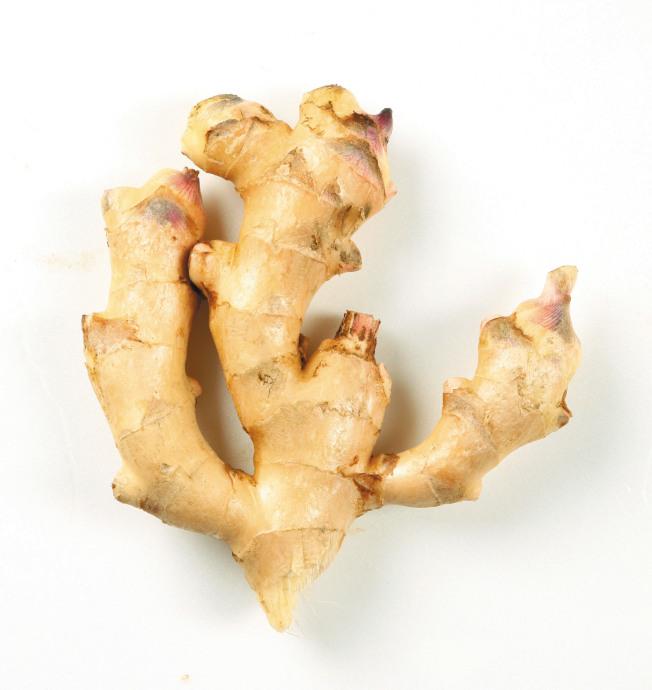 薑若放到發芽,並不會產生毒素,只要把芽眼的部分挖去,再煮熟就可以食用了。(本報資料照片)