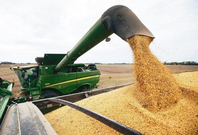 美中貿易談判在北京舉行期間,傳出中國方面加碼採購美國黃豆,釋出善意和讓步。 (美聯社資料照片)