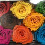紐約進口花卉批發新到厄瓜多爾玫瑰