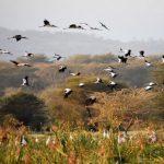 東非之旅 見證鳥禽動物生態奇觀