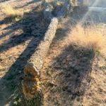 政府關門  惡客闖國家公園 砍約書亞樹紮營