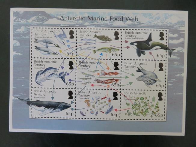 南極洲海洋生物食物鏈圖,磷蝦和尤魚是大型生物的基本食物。