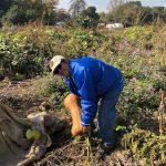 Earthworks有機農場讓癌患抒壓 徵義工