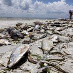 佛州州長簽令 未來4年砸25億保護水資源