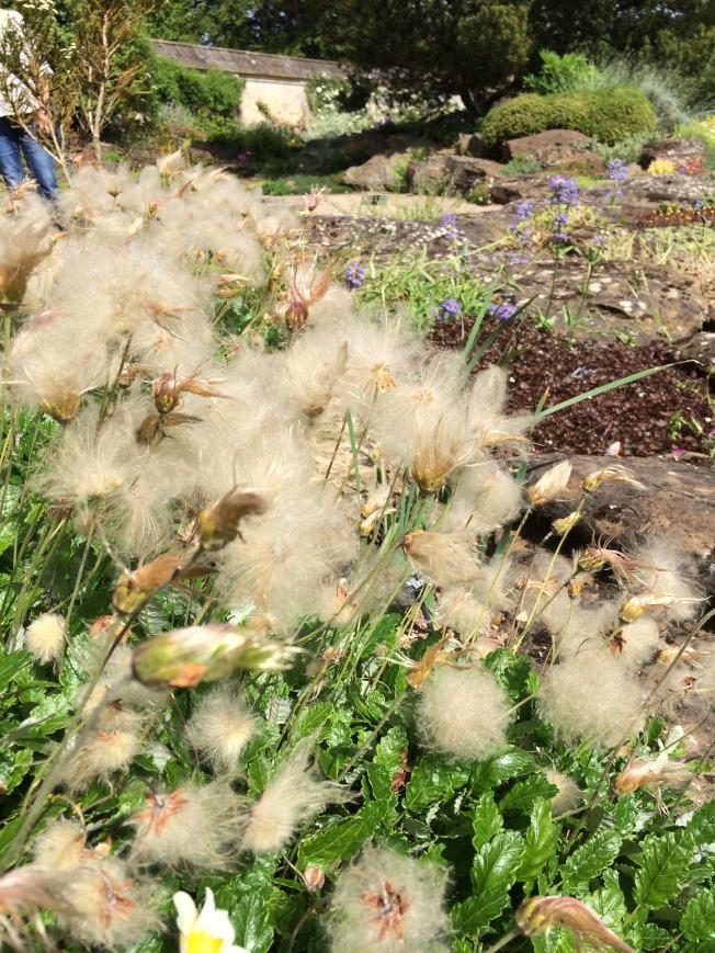 牛津藥草植物園內不知名的植物。