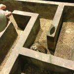 好酷!南京萌寵樂園 樹懶「越獄」了