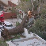 強風吹倒大樹 壓垮民宅2死