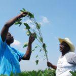 范士丹立法 無證農民可獲綠卡